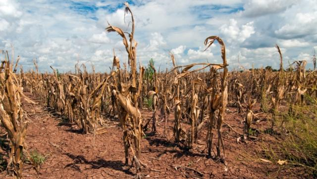CDP: Climate risks could cost corporates $1trn, with biggest losses before 2025