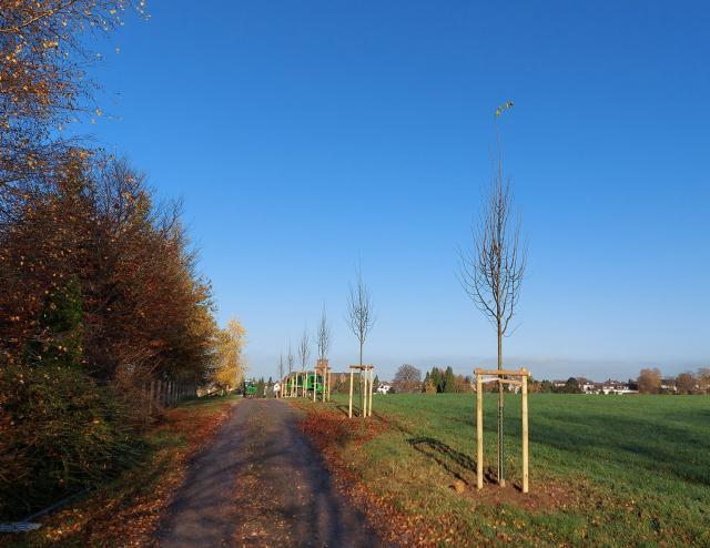 3 TOOL FACTORY trees are now growing in Burscheid