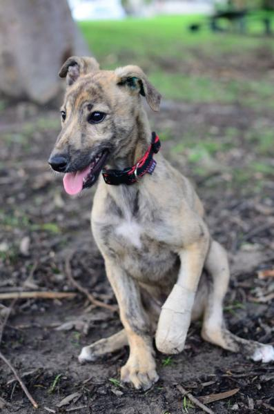 Meet Australia's first pup with a 3D printed prosthetic leg