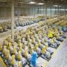 Zentralisierung der europäischen Aktivitäten in der Produktanpassung und Distribution